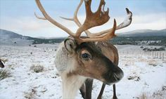 Oh, and also? Their eyes change color with the FREAKIN' SEASONS. | 9 Facts About Reindeer That Will Blow Your Mind