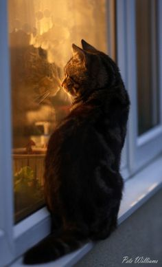 """""""Oh I want a home like those cats have.  Ooohhh.  Lonely. """""""