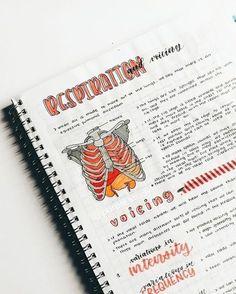 Study Notes Study notes blowfish granola b sandals uk – Granola… - Studying Motivation Motivation Letter, Study Motivation, School Organization Notes, Study Organization, Pretty Notes, Cute Notes, Beautiful Notes, Beautiful Pictures, Revision Notes