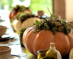 pumpkins w/ succulents