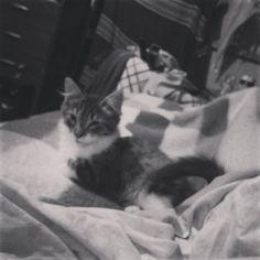 By sir_cid: Cada día más grande la gorda <3 hermosa #cat #catlove #8bits #instasantiago #instachile #kitty #8bits #microhobbit