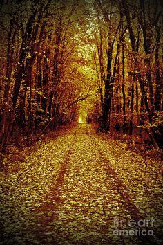 ✯ Back Road