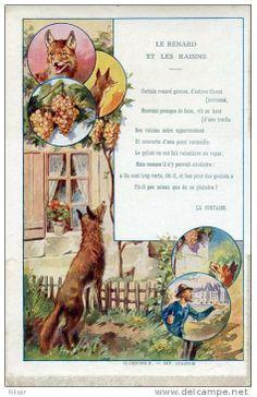 Le renard et les rai