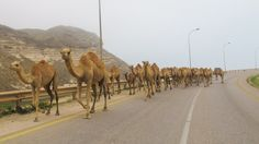 Middle East road trip! :D #oman