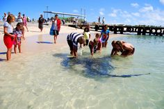 Parrie, the stingray, in Struisbaai harbour Weekend Breaks, Get Outside, Cape Town, The Locals, Adventure Travel, Places To See, South Africa, Tourism, World