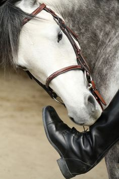 Hi :) yes its me and you do get a sugar when we're done.  This horse looks a lot like my first horse Magnum.