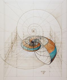 Architectural Drawings of Butterflies and Nautiluses by Rafael Araujo