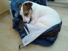 in case you forget to take me when you go out! #jack russell