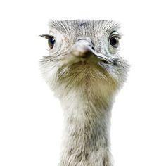 Animal Portraits Morten Koldbyhttpkoldbycom 若い - The most striking animal portraits youll ever see by morten koldby