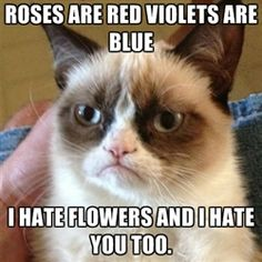 212 Best Funny Valentines Humor Images Funny Valentine Valentines