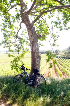 Bike leaning against tree in the French countryside Country Farm, Country Life, Country Living, Country Roads, Beautiful World, Beautiful Places, Magic Places, Vie Simple, Country Scenes