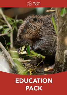 Beaver Trust Education Pack – The Beaver Trust Lodge Beaver Animal, Trust, Packing, Education, Animals, Bag Packaging, Animales, Animaux, Animal