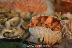 Le plateau de fruits de mer réalisé à l'occasion des Rencontres iodées 2013