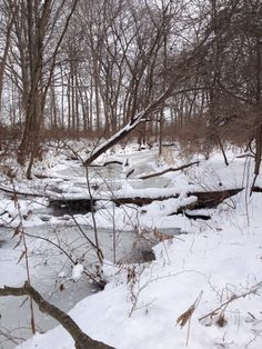 Coffee Creek Watershed Preserve, Chesterton, IN. Winter 2013-14.