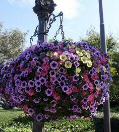 Plant Pests, Wisteria, Exterior, Gardens, Beauty, Plant, Outdoor Gardens, Outdoor Rooms, Garden