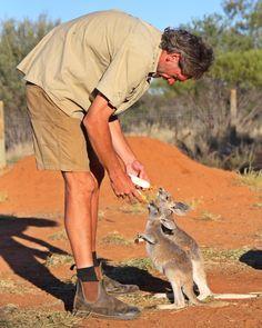 Watch my wonderful little joeys Rex and Ruby on Kangaroo Dundee tonight on the