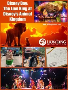 The Lion King at Disney's Animal Kingdom - On the Go in MCO