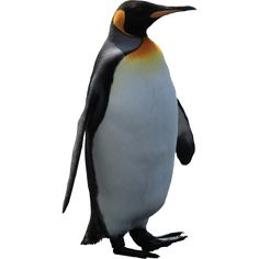 Imperator penguin PNG image image with transparent background Penguin Images, Penguin Pictures, Animals Images, Google Penguin, Render People, Mask Images, Picsart Png, Architecture Drawings, Zoology