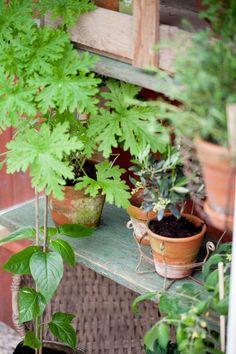 Bygga miniväxthus av gamla fönster – steg för steg Garden Planning, Garden Art, Planter Pots, Flowers, Window, Outdoors, Pretty, Tips, Gardens