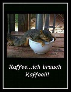 guten morgen - http://guten-morgen-bilder.de/bilder/guten-morgen-510/