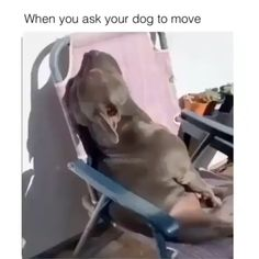 Things that make you go AWW! Like puppies, bunnies, babies, and so on. Funny Animal Memes, Funny Animal Videos, Cute Funny Animals, Dog Memes, Funny Animal Pictures, Cute Baby Animals, Funny Dogs, Animals And Pets, Funny Pitbull
