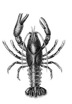 Sisters' Warehouse: Crustacea prints... Stampe di crostacei