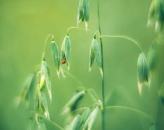 Ladybird photo print, Green grass print, Meadow print, Meadow flowers wall art, Floral photography, Greeting Cards, Modern rustic decor