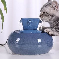Pet Cat Bowl Automatic Water Feeder Water Dispenser Circulating Water Drinking Fountain For Pet Cat Feeder Supplies - -Ceramic Pet Cat Bowl Automatic Water Feeder Water Dispenser Circulating Water Drinking Fountain For Pet Cat Feeder Supplies - - Cat Water Fountain, Drinking Fountain, Cat Drinking, Big Dog Beds, Dog Pee Pads, Pet Car Seat, Cat Feeder, Water Dispenser, Sleeping Dogs