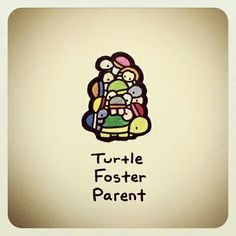 Turtle Foster Parent @turtlewayne