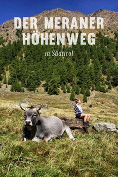 Der Meraner Höhenweg ist ein wunderschöner Wanderweg in Südtirol. Er umrundet das Bergmassiv der Texelgruppe und bietet dabei Ausblicke auf die Stadt Meran, das Etschtal und den Vinschgau, das Passeier- und das Schnalstal. Alle Infos auf lilies-diary.com.