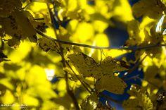 Autumn Colors by Andrés J. Márquez, via 500px