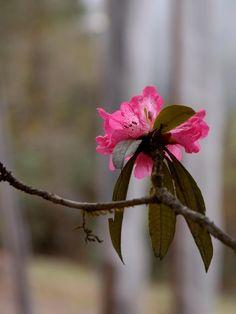 Bhutan, a biodiversity hotspotvon Françoise Brenckmann pink flower garden Bhutan, Video Photography, Pink Flowers, Beautiful Pictures, Photo And Video, Landscape, World, Garden, Nature