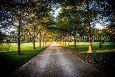Tree Lane Photography Fine Art Photography @patrickrabbatph #etsymntt #etsyspecialT #integrityTT
