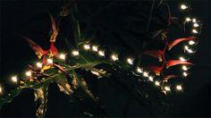 """L'artiste Daniel Barreto  anime des boucles infinies de flammes, dans des gifs surréalistes ... Les brèves animations continuent son expérimentation avec la lumière et la photographie longue exposition comme vu ici l'année dernière dans son court métrage """"Ignight"""""""