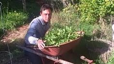 Learn Organic Gardening at GrowingYourGreens - YouTube