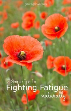 7 simple strategies for fighting fatigue naturally, even when you're exhausted! When strict diet changes and long lists of supplements fail, try this.