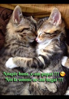 Happy Evening, I Love Cats, Cute Animals, Smile, Nighty Night, Pretty Animals, Cute Funny Animals, Cutest Animals, Laughing
