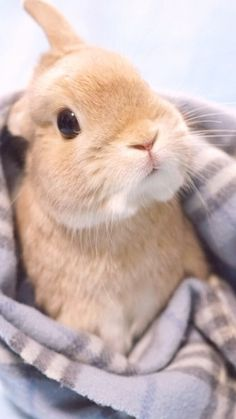 Sweetest Animals - My Garden - Hasi - # Cutest - Hase - Cute Baby Bunnies, Cute Baby Animals, Animals And Pets, Cute Babies, Funny Animals, Bunny Images, Fluffy Bunny, Pet Rabbit, Tier Fotos
