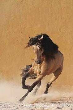 Such a pretty horse!!