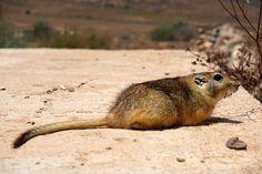#DOCUMENTAL #ECOLOGÍA #NATURALEZA #CROWDFUNDING - Expedición de Rescate de Fauna en el Desierto y grabación de un Documental sobre esta problemática, su impacto. Nos aventuramos hacia el sur de Marruecos y Sáhara Occidental donde existen cientos de trampas de caída para fauna. Crowdfunding Verkami: http://www.verkami.com/projects/12200-documental-aljibes-y-pozos-del-desierto-la-eterna-trampa/