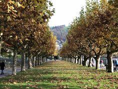 Zug #switzerland Switzerland, Vineyard, Travel, Outdoor, Train, Voyage, Outdoors, Viajes, Traveling