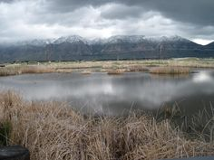 Bird Refuge  Brigham City, Utah