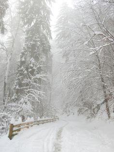 Wishes & Dreams . Winter Love, Winter Night, Winter Snow, Winter Wonderland Christmas, Prim Christmas, Winter Scenery, Winter's Tale, Snow Scenes, Winter Pictures