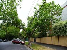 """""""If you want to remove a significant tree or to cut, trim, prune or anything else which may result in the health of the significant tree being compromised, a permit from Council must be obtained."""""""