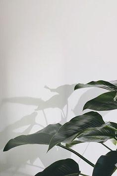 Ideas Painting Wallpaper Minimalist For 2019 Ideas Painting Wallpaper Minimalist For 2019 Samsung Wallpapers, Full Hd Wallpapers, Plant Wallpaper, Painting Wallpaper, Wallpaper Backgrounds, Plant Aesthetic, Green Plants, Green Flowers, Indoor Plants