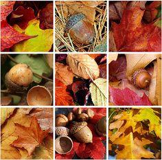 leaves & acorns