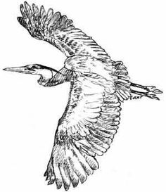 great blue heron printable - Google Search