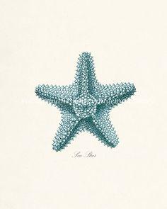 Vintage Sea Star Sea Shell Natural History por vintagebytheshore
