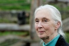 The iconic primatologist talks with MNN about turning 80 years old and about her latest book, \u0027Seeds of Hope.\u0027