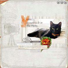 Digi Cat Sketch, Picture Photo, Dog Cat, Scrap, Cats, Animals, Gatos, Animales, Cat Doodle